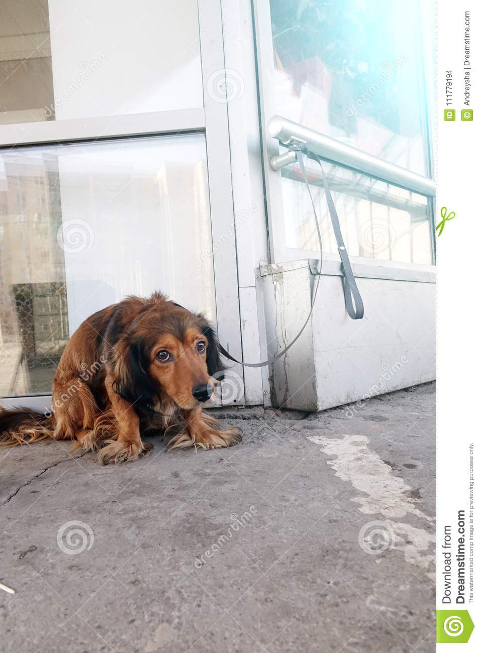The dog is tied with a collar to the building on the street.
