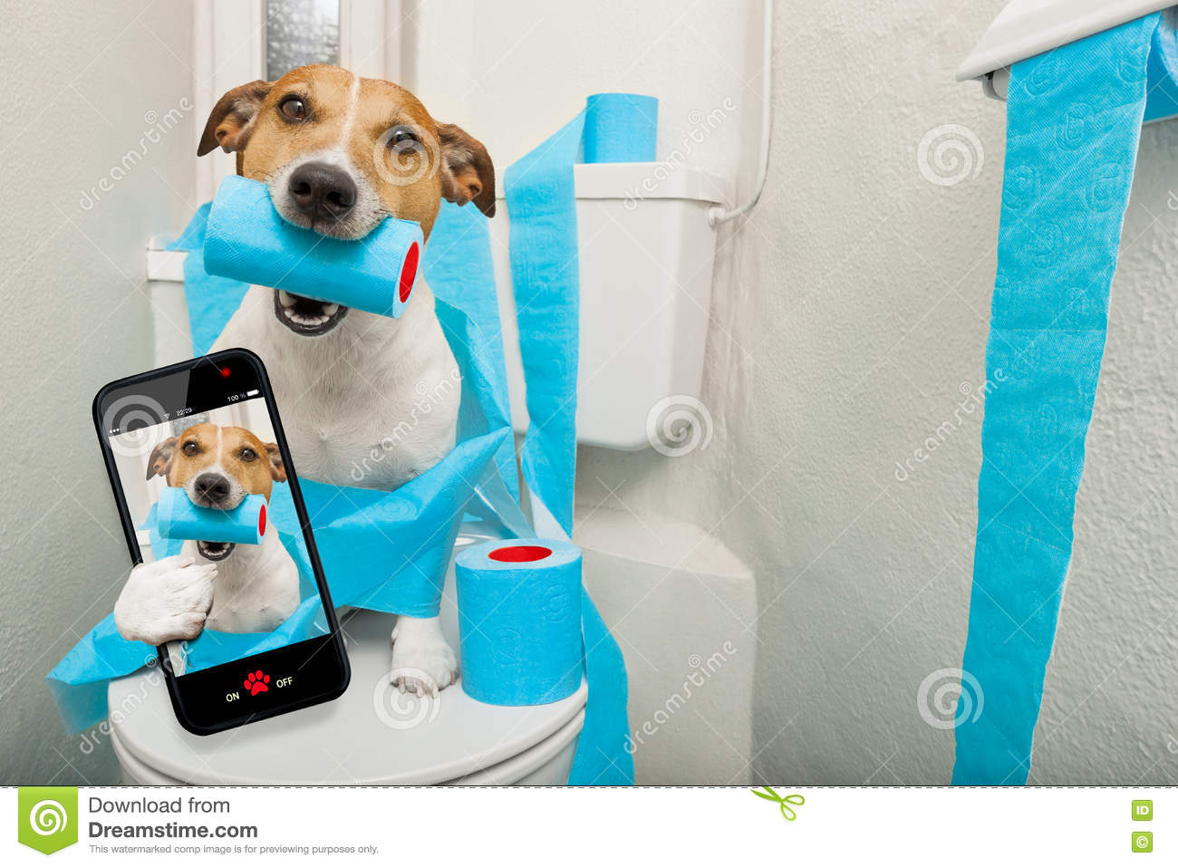 Dog On Toilet Seat Stock Image Image Of Animal Diarrhea