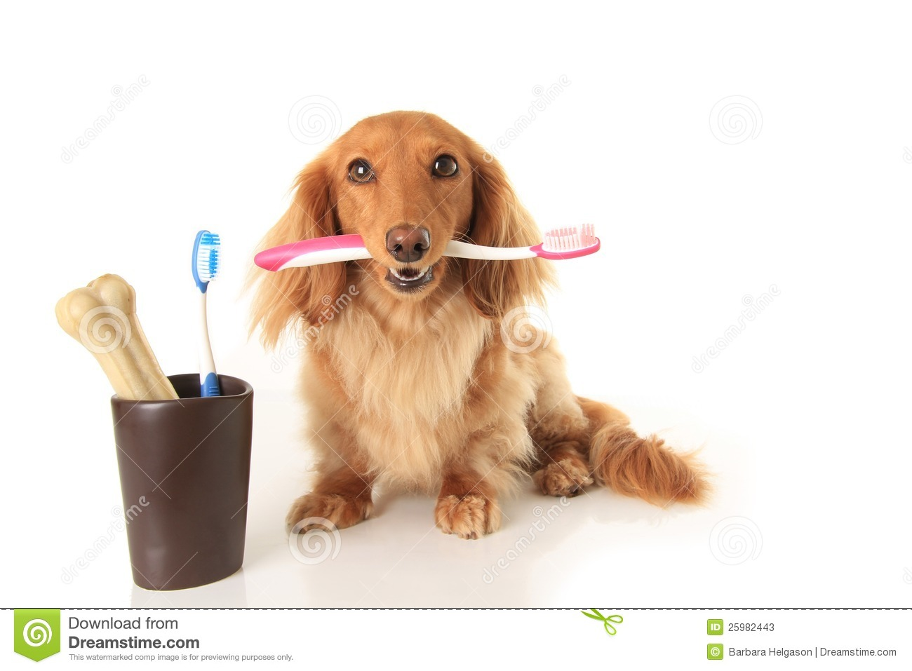 Dog and tooth brush Cute Animal Brushing Teeth