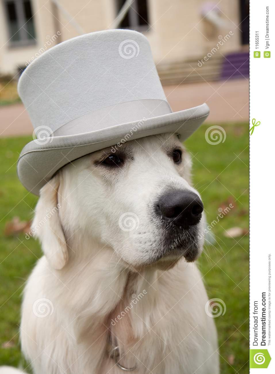 Dog With Top Hat Stock Image Image Of Cute Wedding