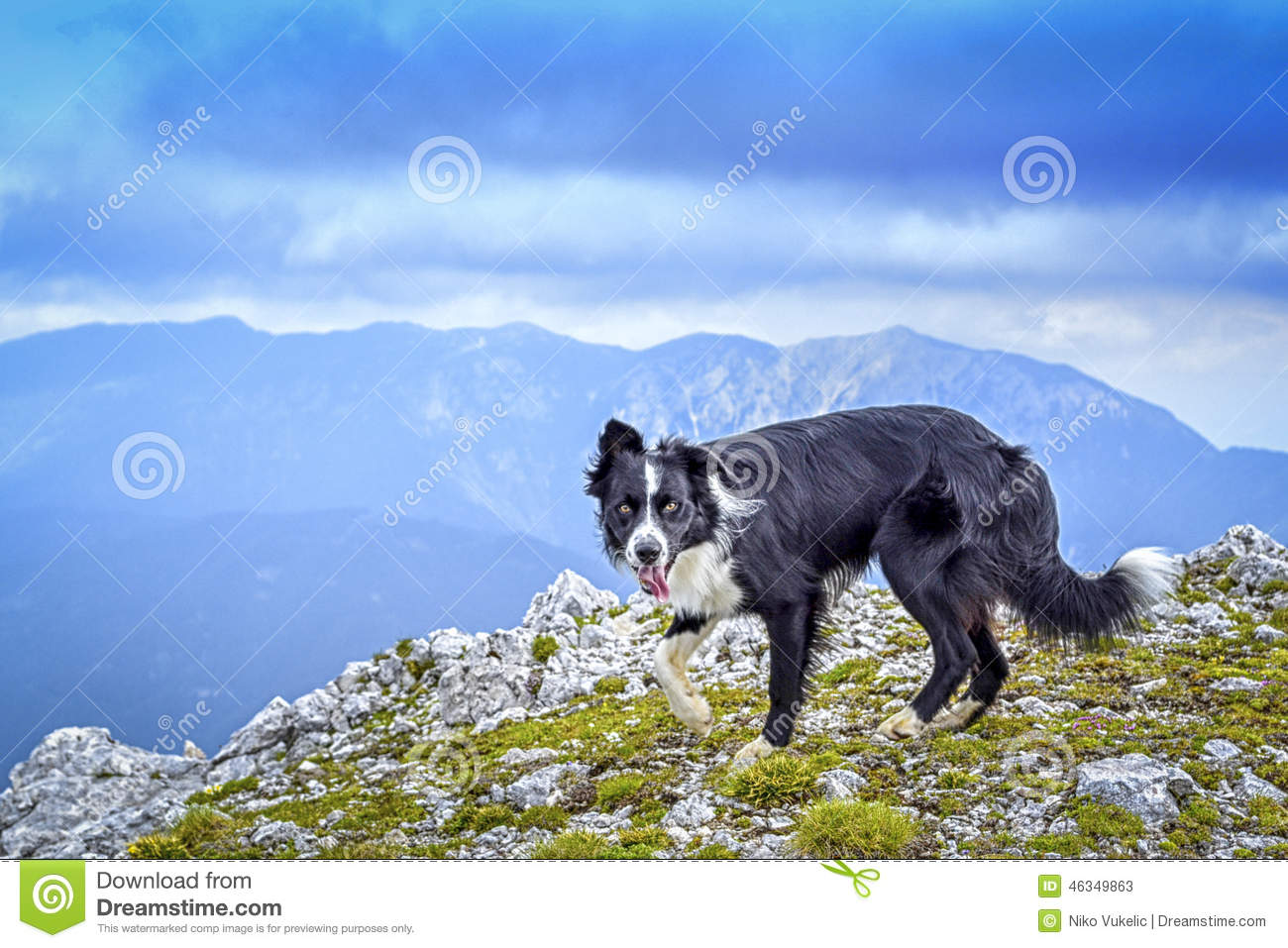 The dog at the top of the mountain