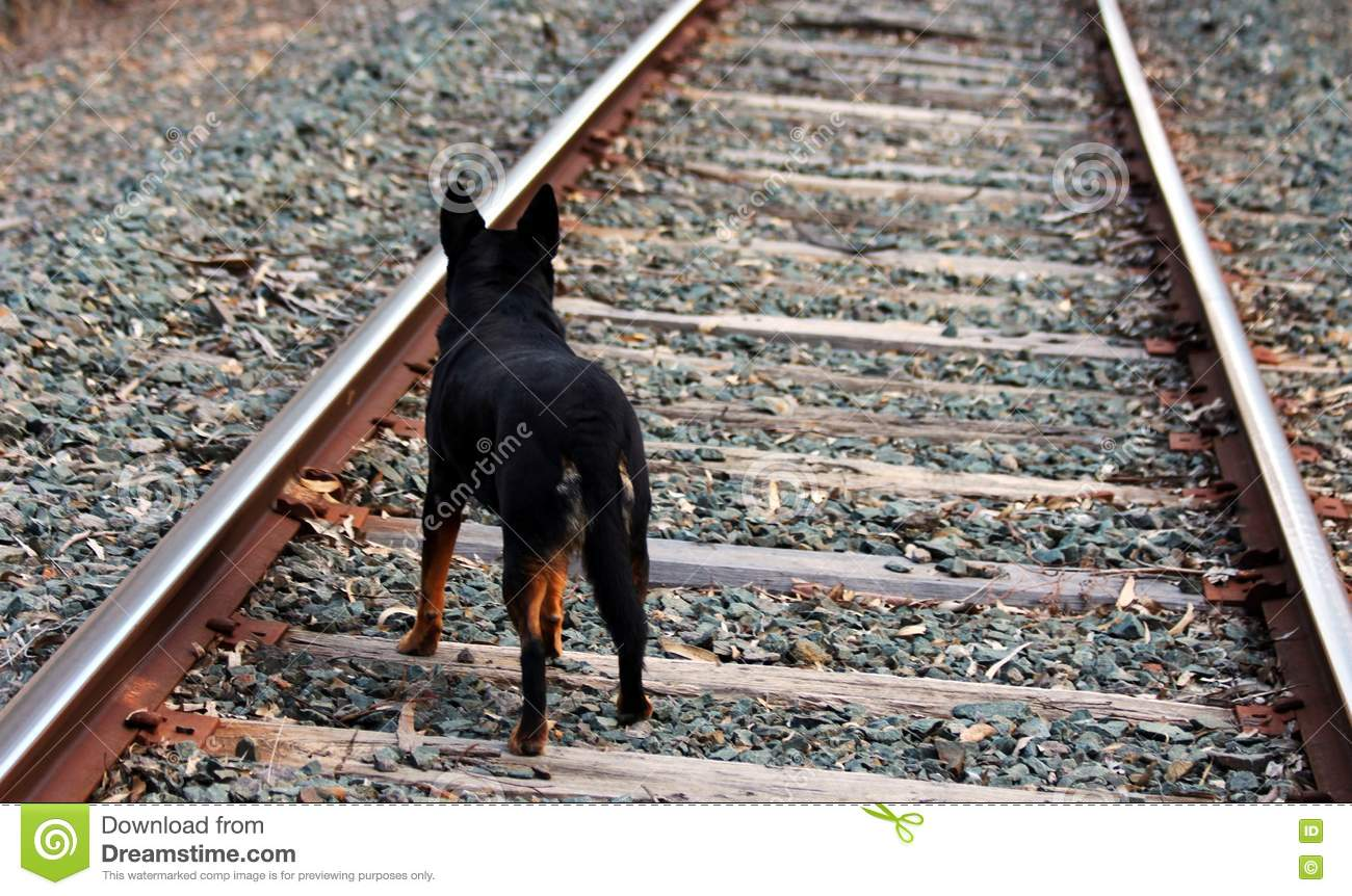 Young Boy Walking Down Railroad Track With Vintage
