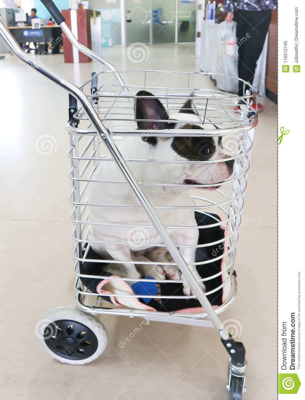 Dog in the trolley stock image  Image of bulldog, trolley