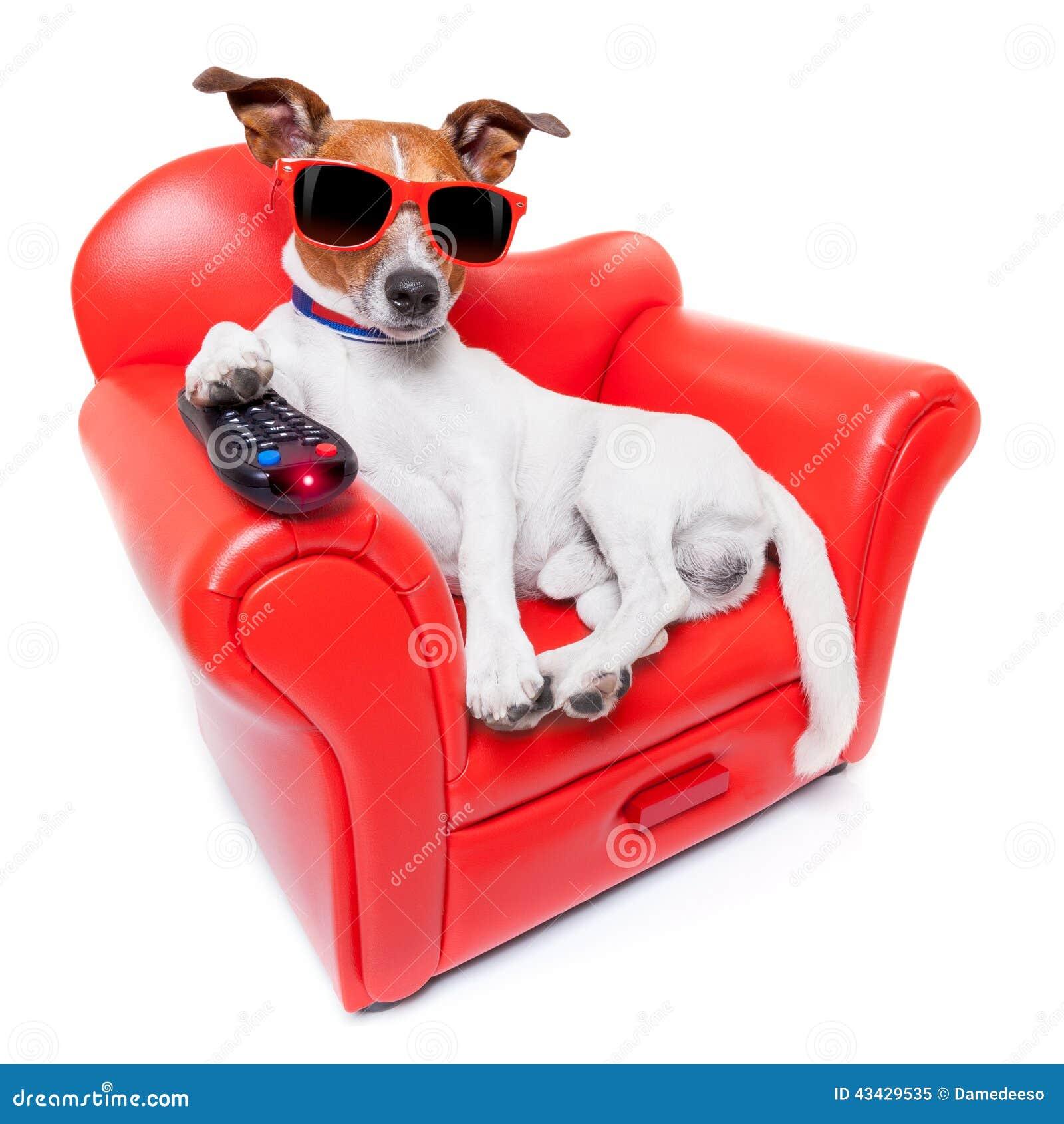 Dog Tv Stock Photo Image 43429535