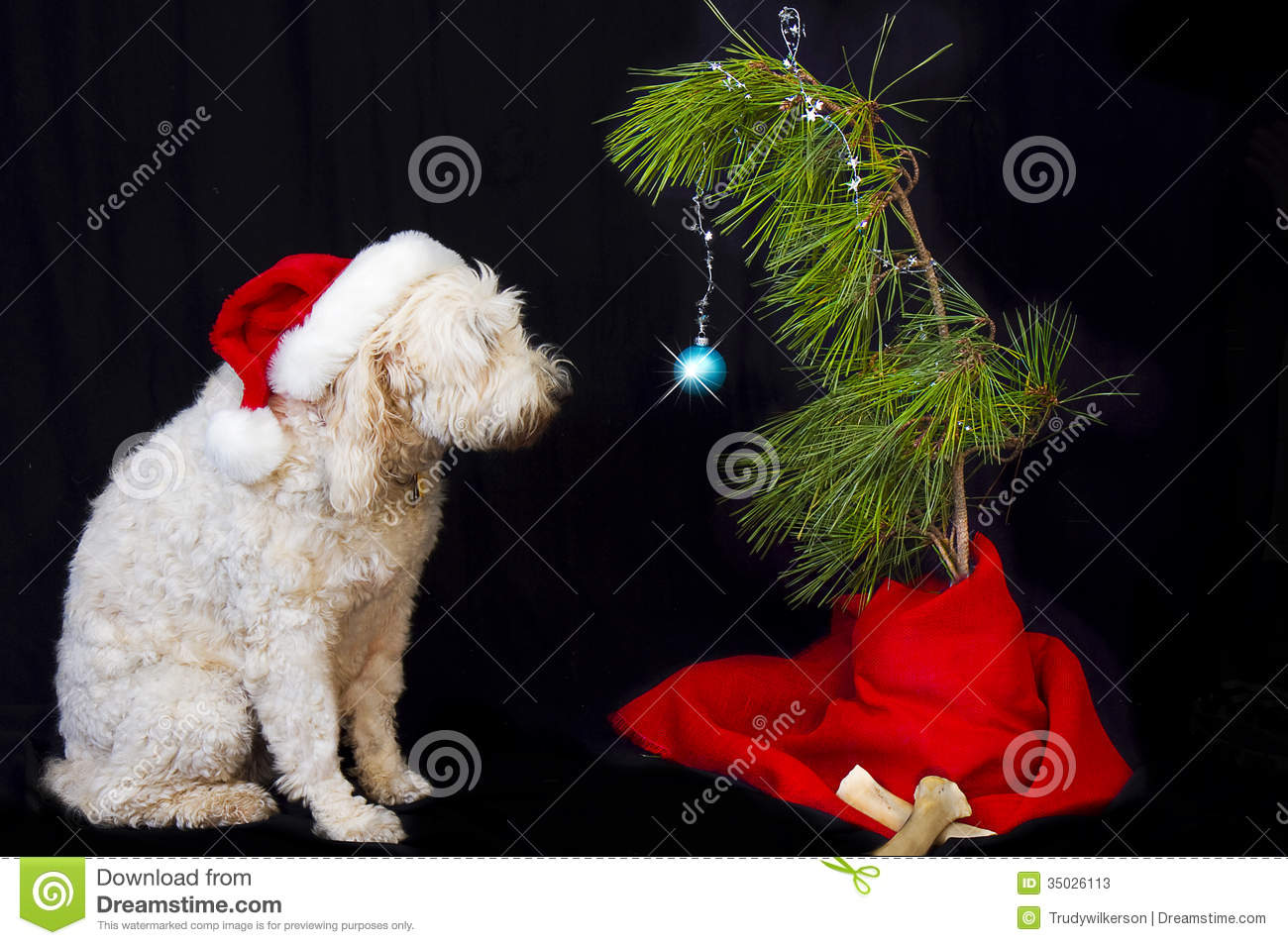 large golden doodle dog witting looking at his twig like christmas tree with only one christmas ball ornament - Goldendoodle Christmas Decorations