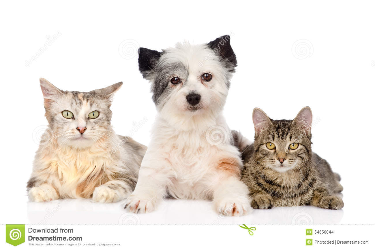 Dog and two cats together. isolated on white background