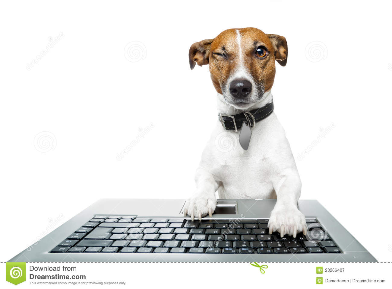 Dog Using A Computer Royalty Free Stock Photography ...