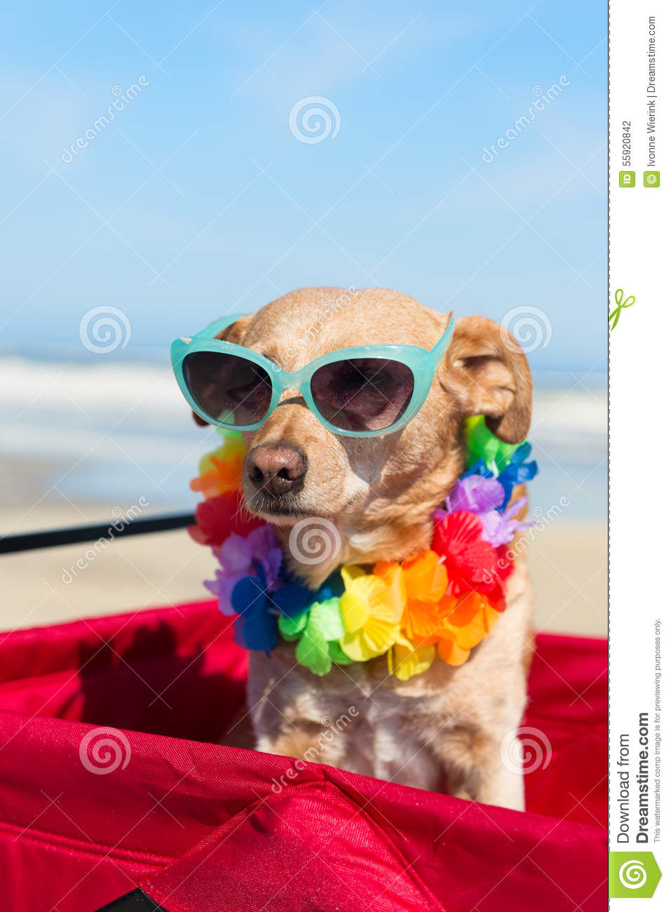 Dog On Vacation At Beach