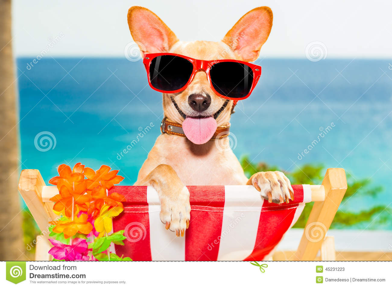 ... at the beach having a a relaxing time on a hammock while sun tanning Relaxing Dogs