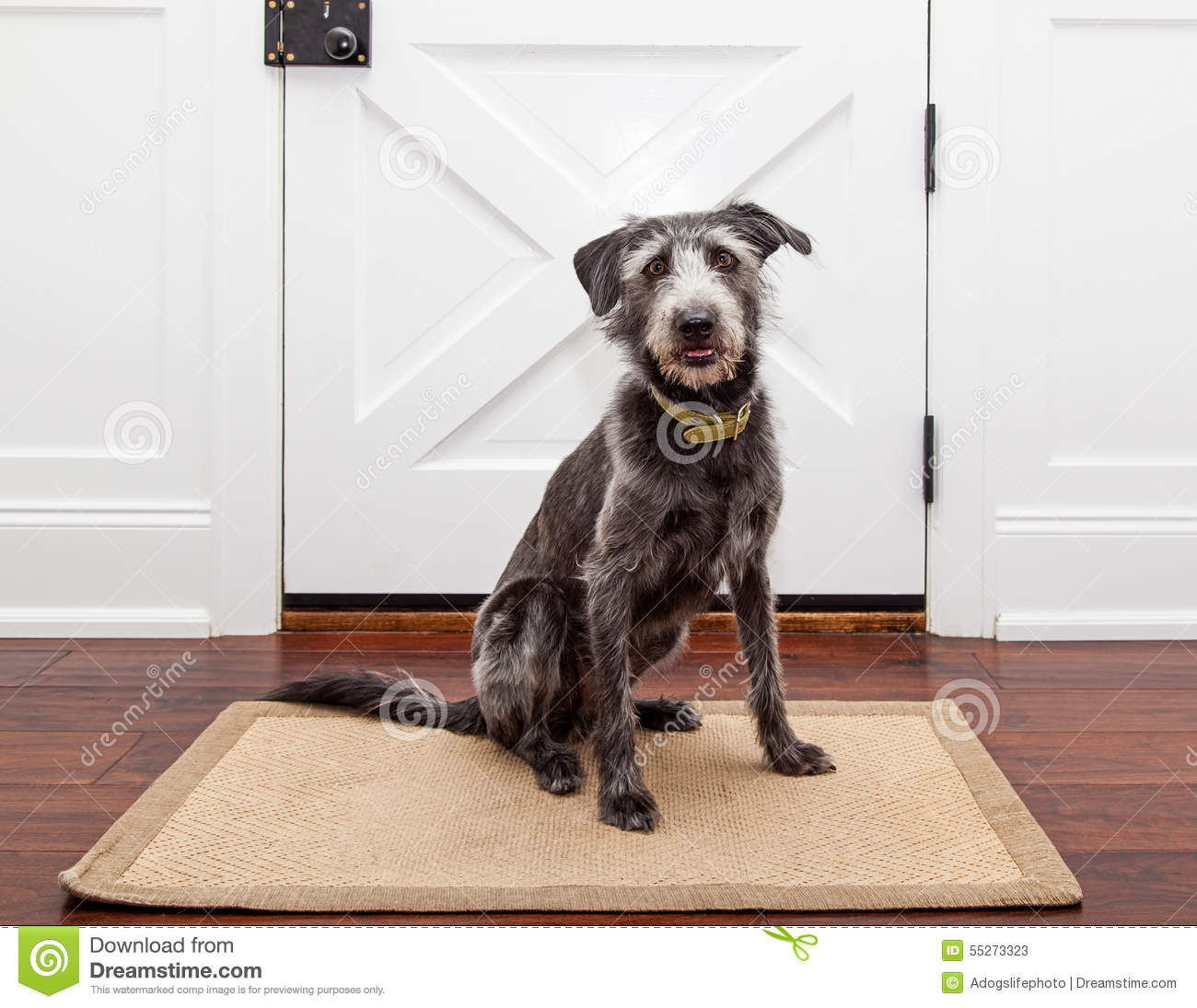 Dog Waiting By Front Door Stock Image Image Of Entry