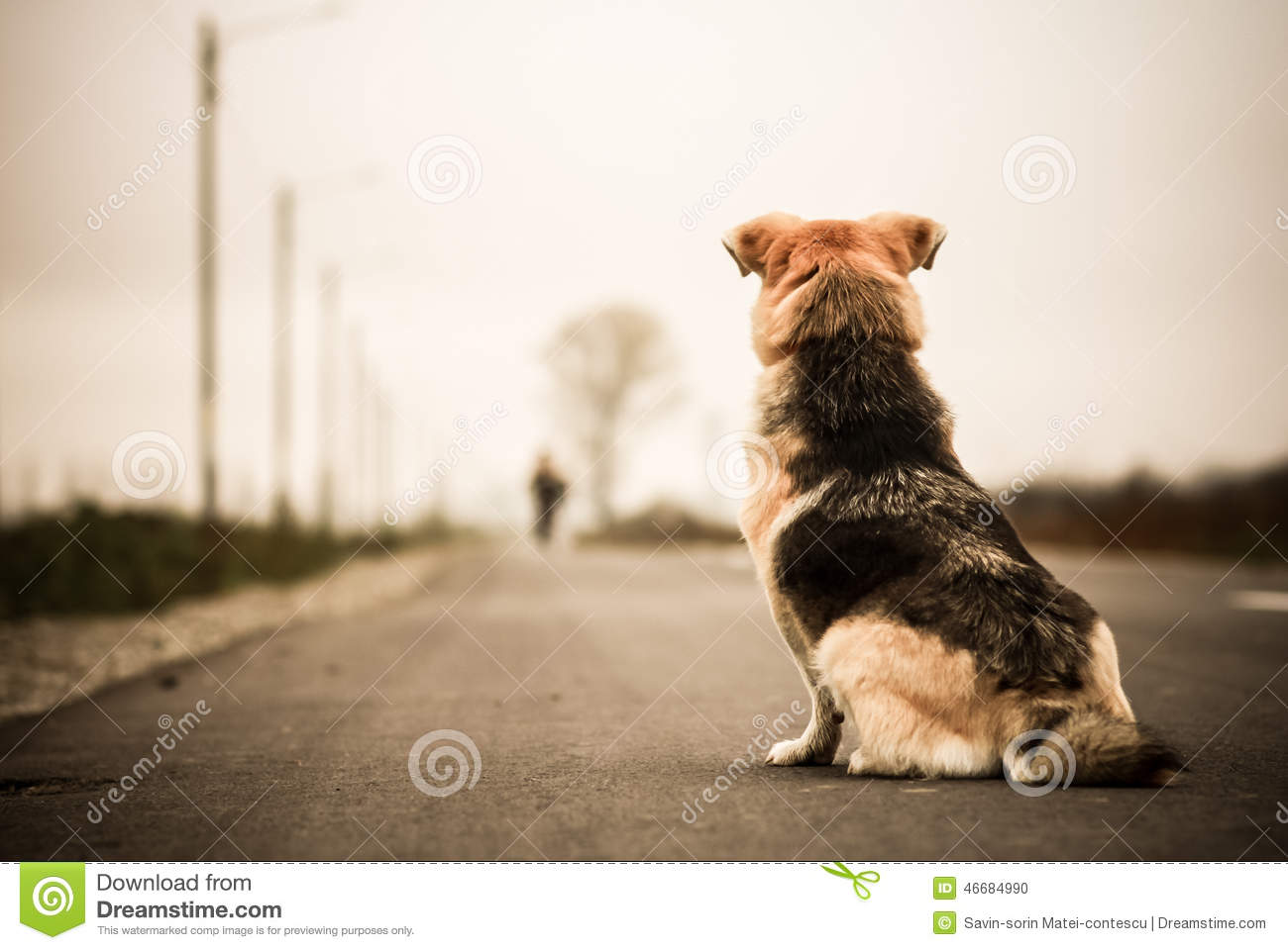 Dog Waiting In The Street Stock Photo - Image: 46684990