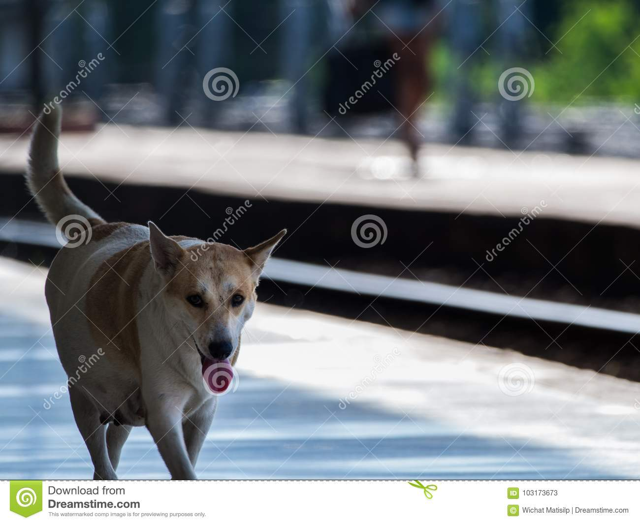 Dog Walked In The Train Station Stock Image - Image of background