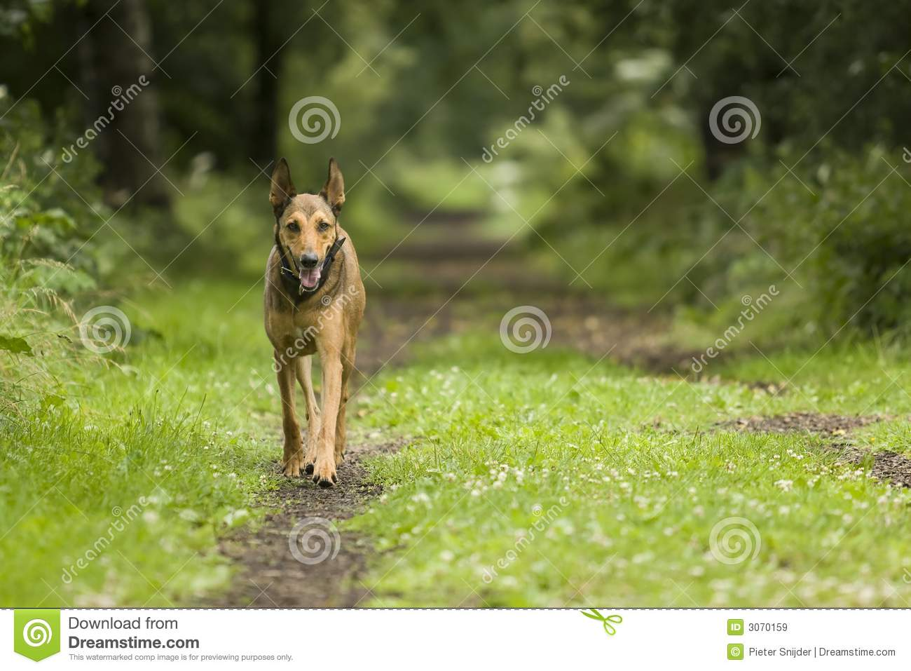 Dog walking in forest