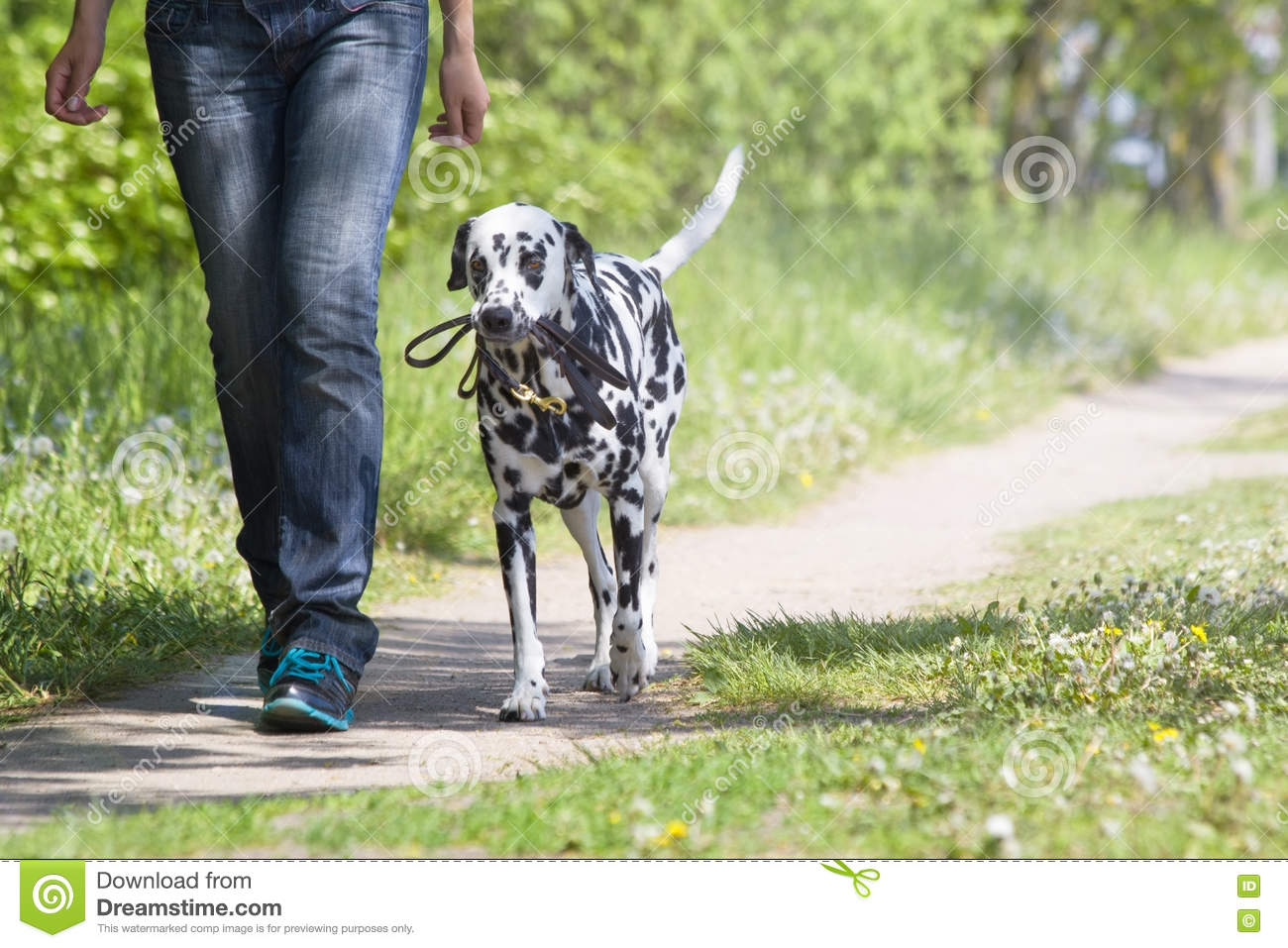Dog walking with the owner