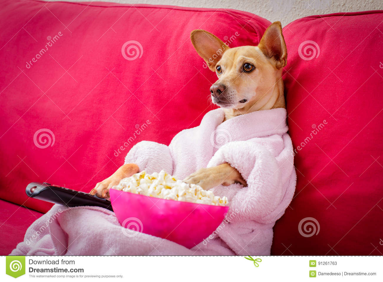 how to get dog tv channel