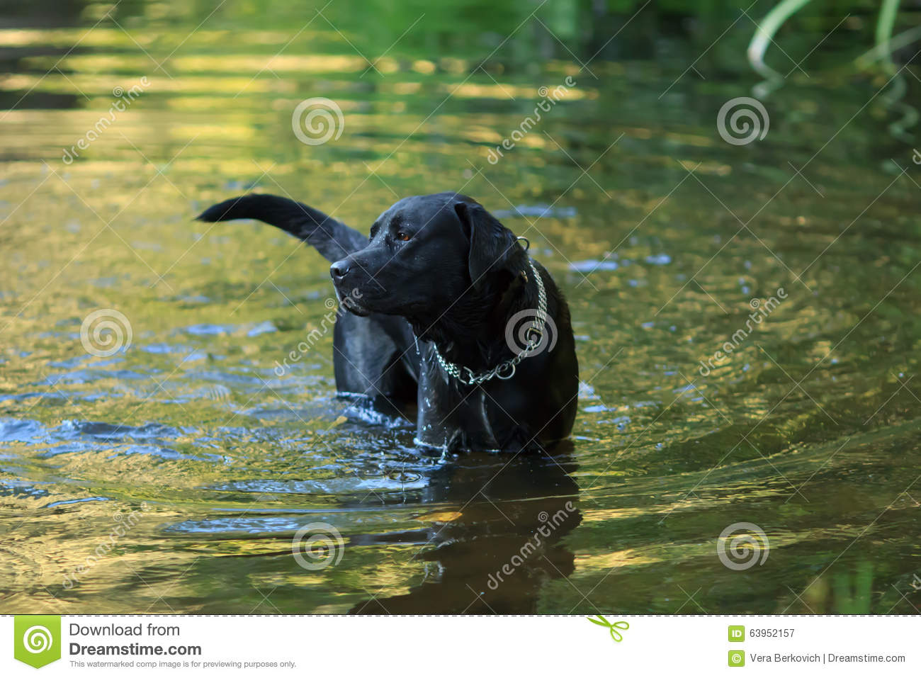 Dog And Water Stock Image Image Of Friendship Expression 63952157