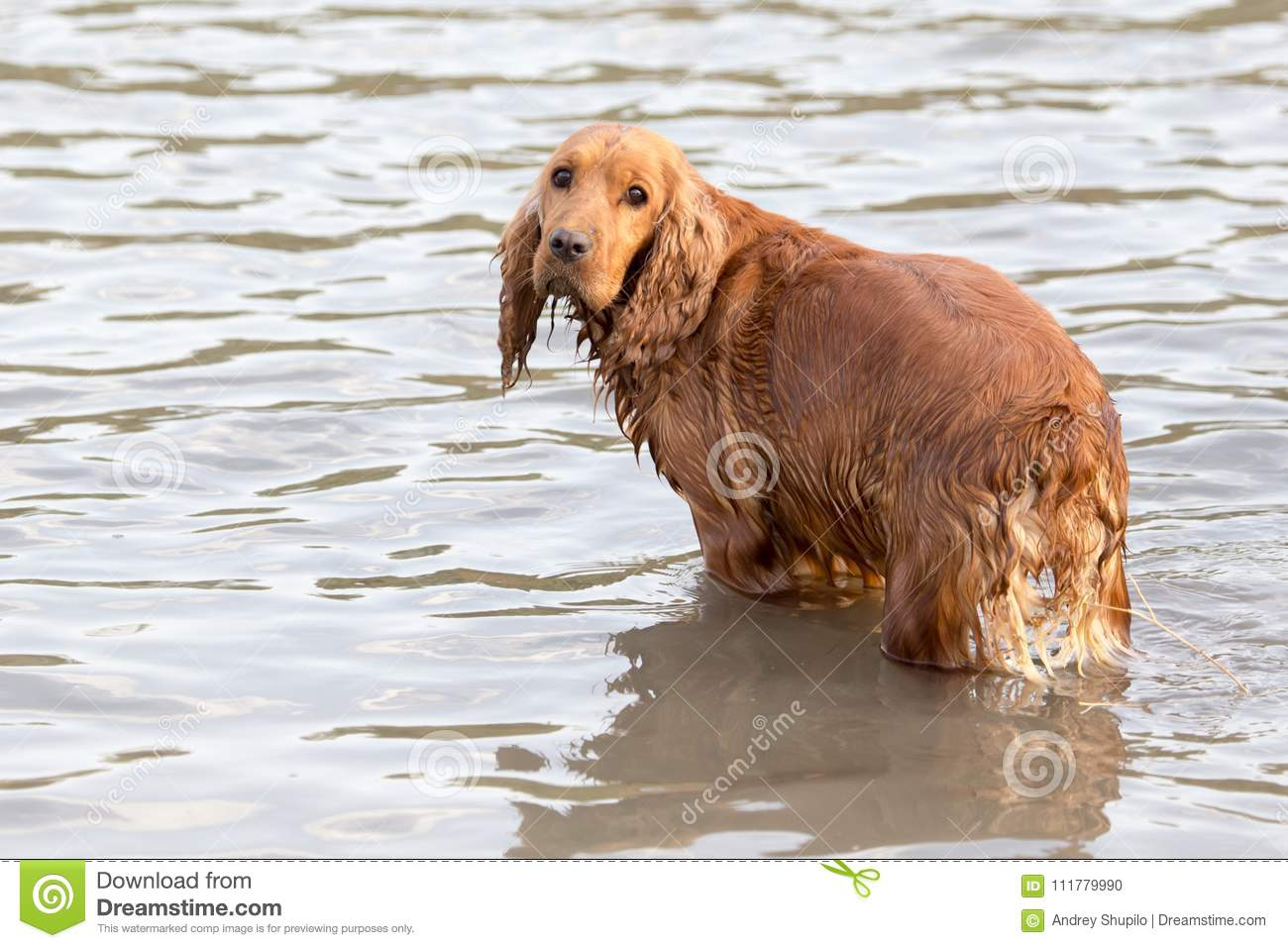 Dog in water Nature