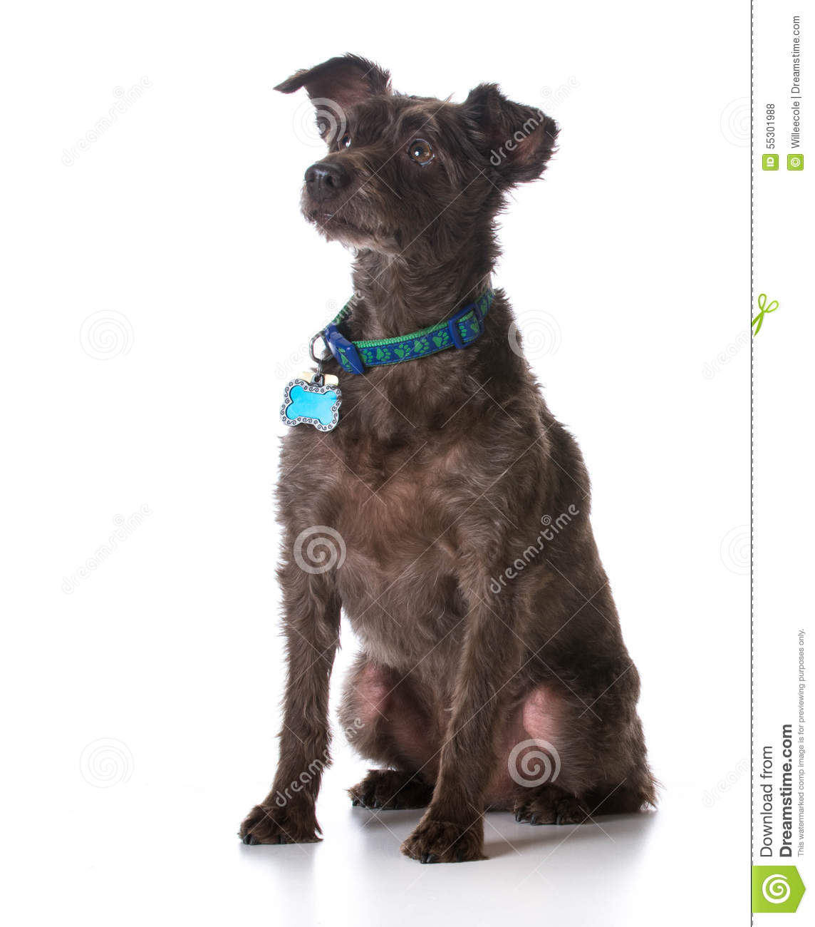 Dog Wearing Collar With Name Tag