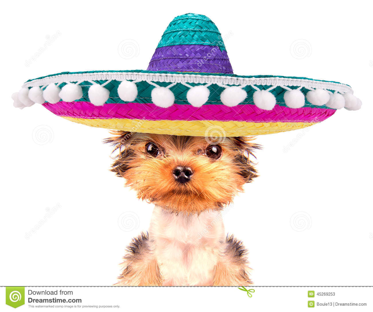 Cute puppy dog wearing a mexican hat on a white background.