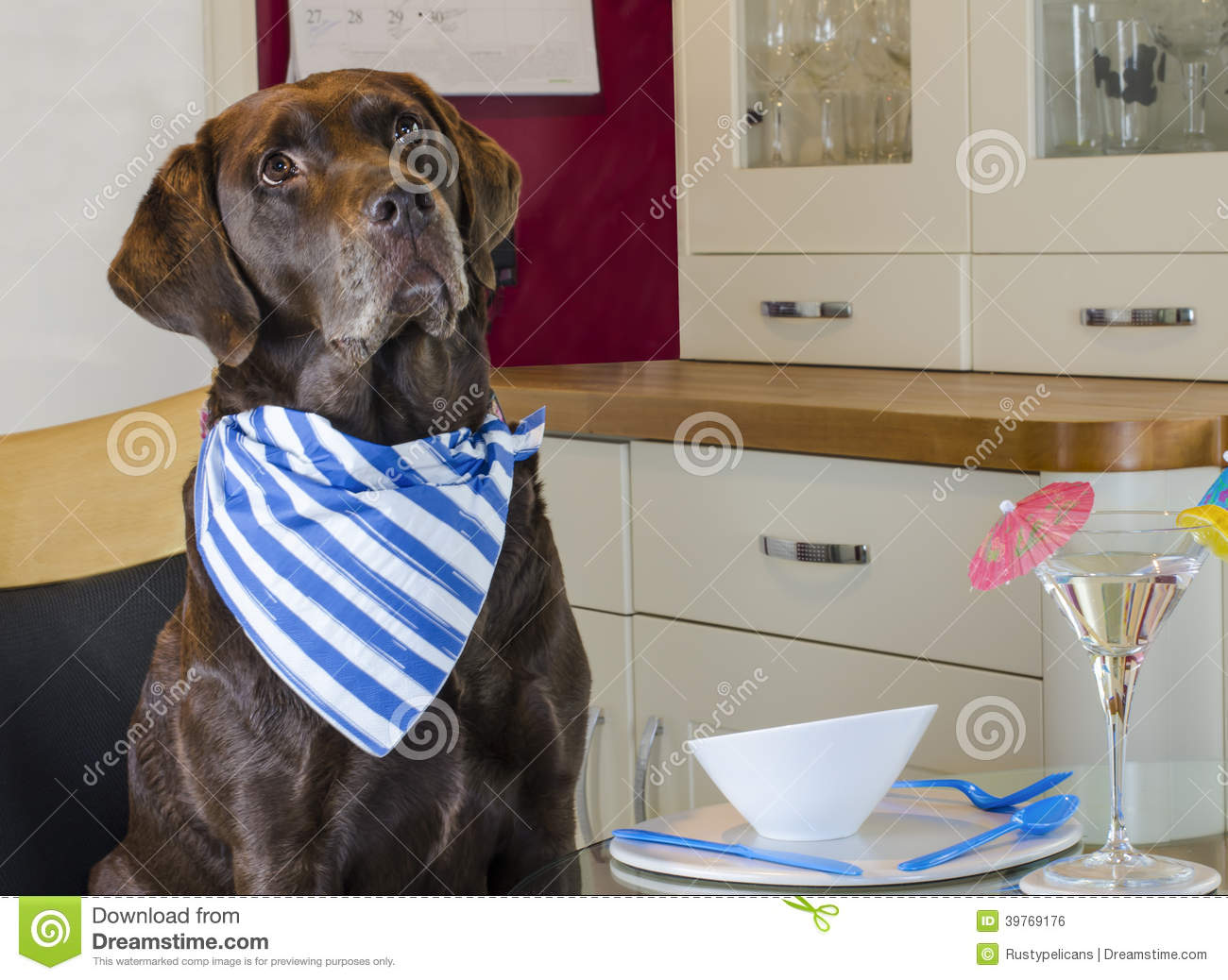 Dog Wearing Napkin In Kitchen Waiting For Cocktail Stock
