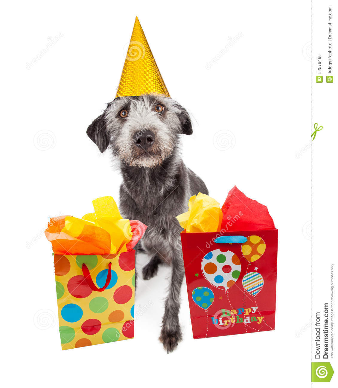 Cute Terrier Crossbreed Dog Sitting And Wearing A Yellow Birthday Party Hat With Colorful Gift Bags
