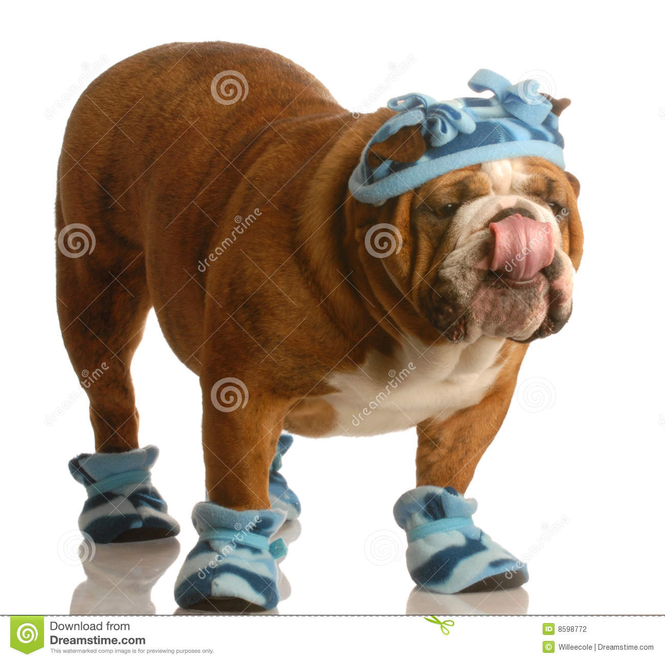Dog Wearing Winter Hat And Boots Stock Photography