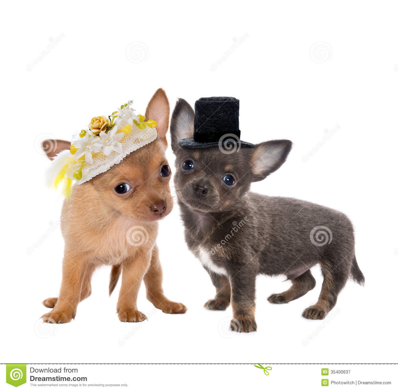 Dog Wedding Royalty Free Stock Photography - Image: 35400637