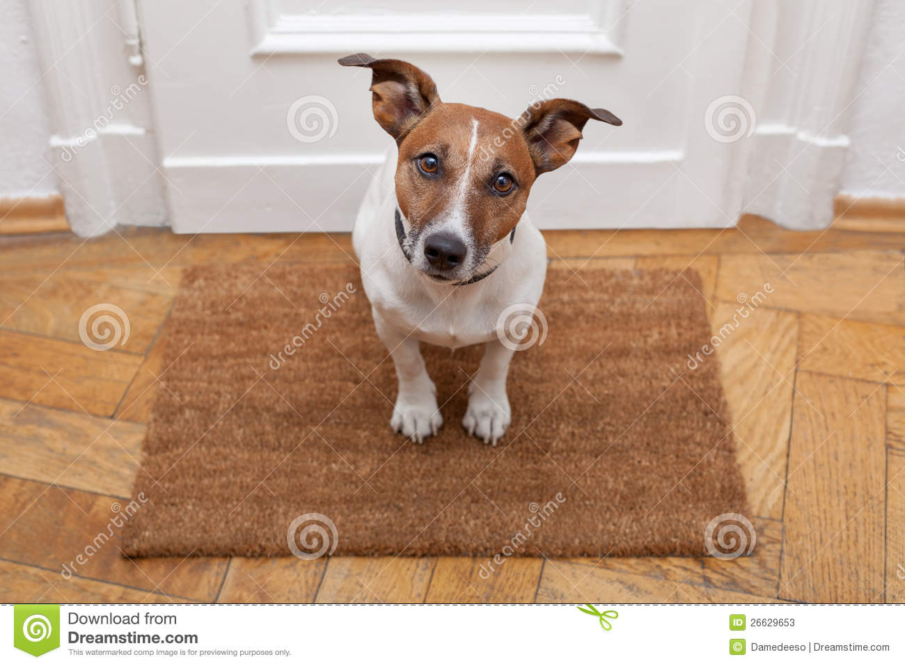 Download Dog welcome home stock image. Image of dirty, doormat - 26629653