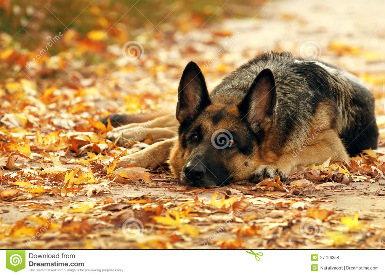 Dog in yellow and red autumn leaves