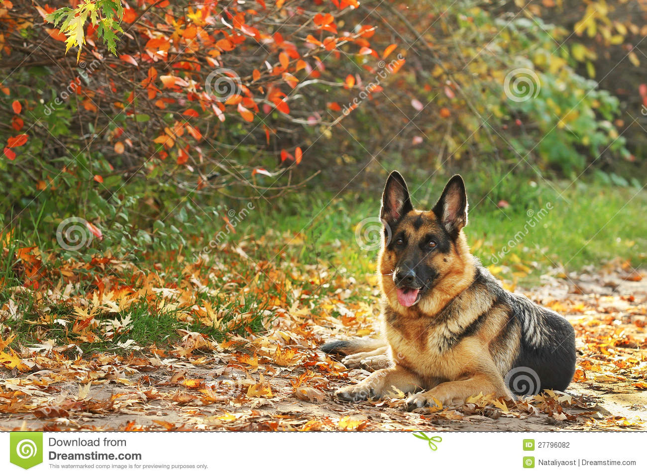 Dog in yellow, red leaves