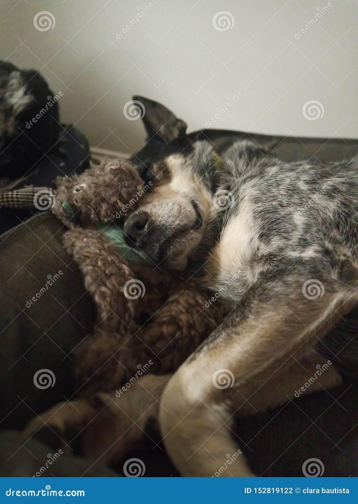 Doggo för söta drömmar