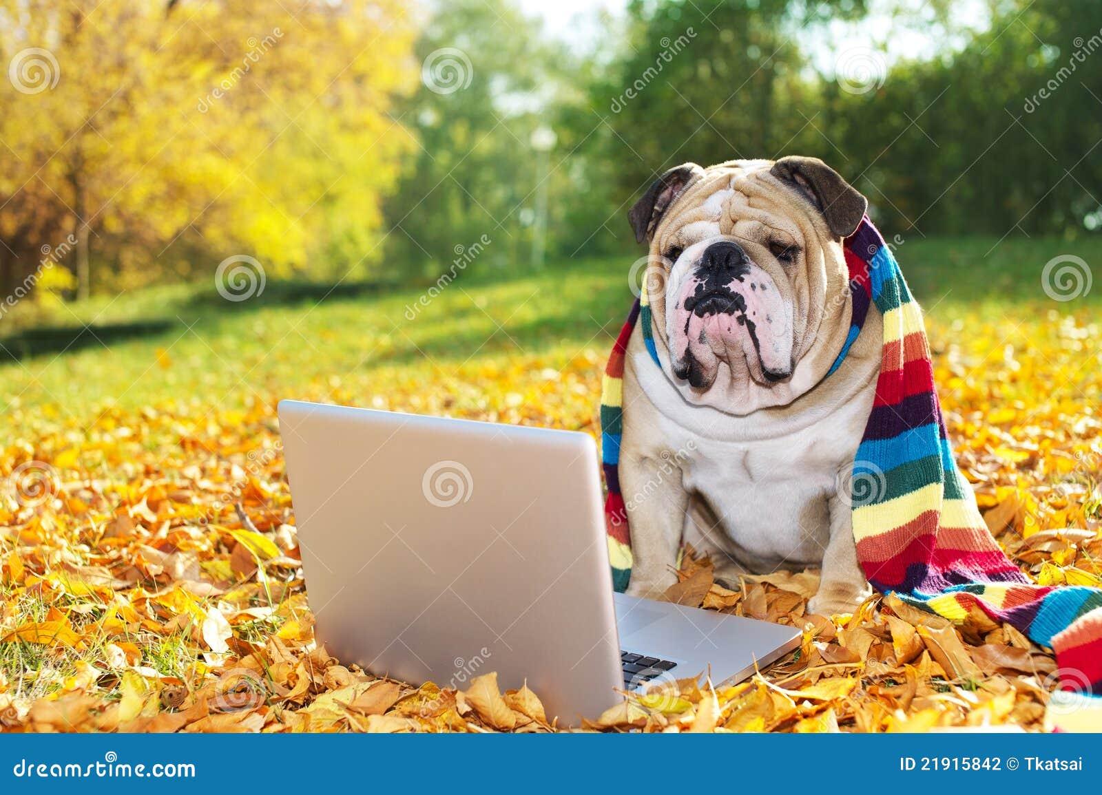 Dogo con una computadora portátil en otoño