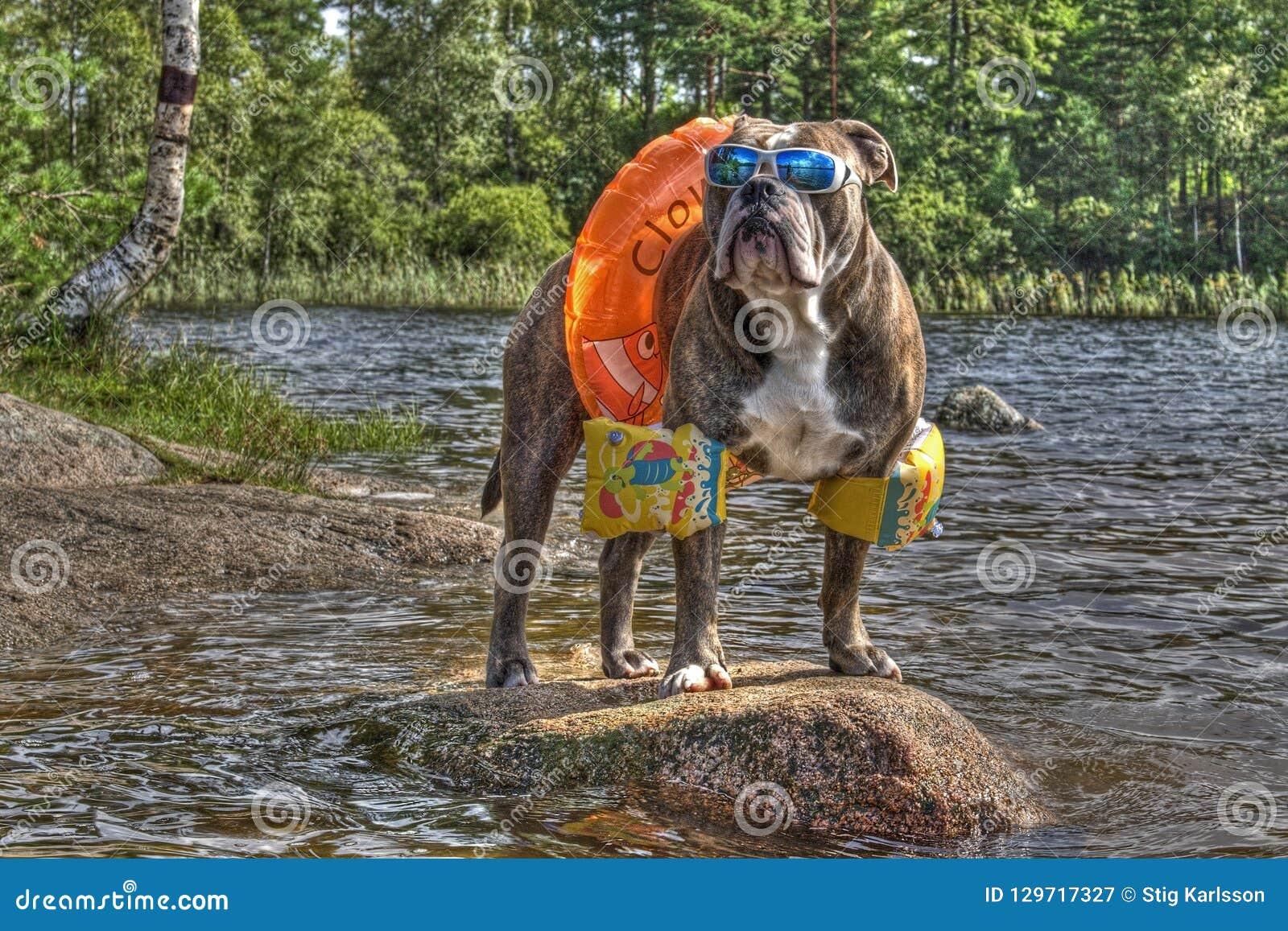 Dogo en el lago con los floaties encendido en HDR