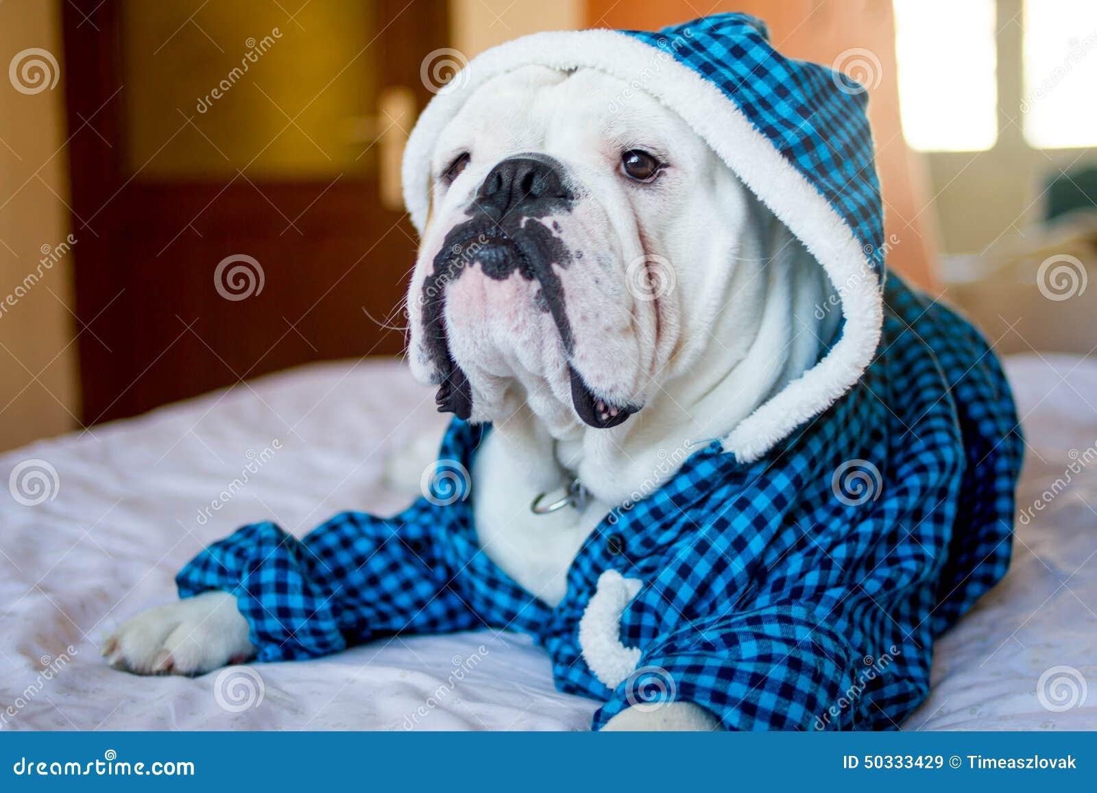 Dogo inglés soñoliento