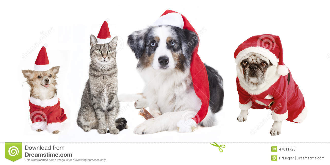 Cat Christmas Stocking Stock Photos, Images, & Pictures - 89 Images