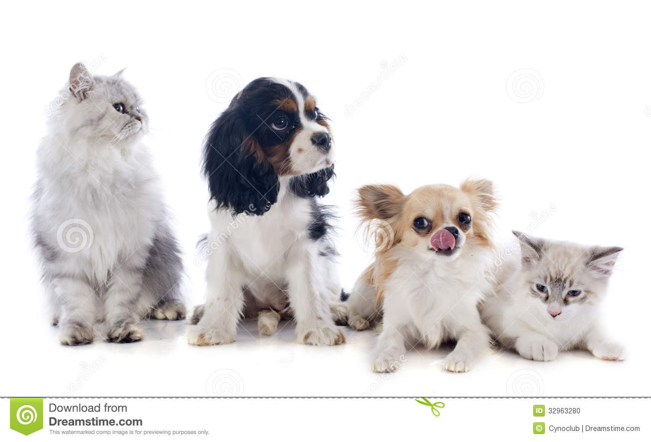 Images Of Dogs And Cats