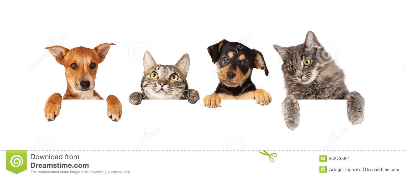 Timeline Dogs And Cats