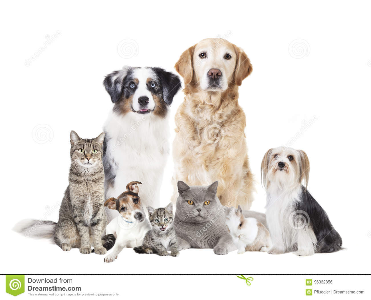 Dogs cats isolated