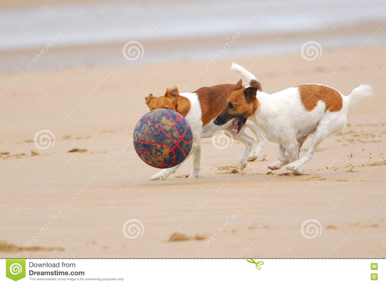 Dogs chasing a ball