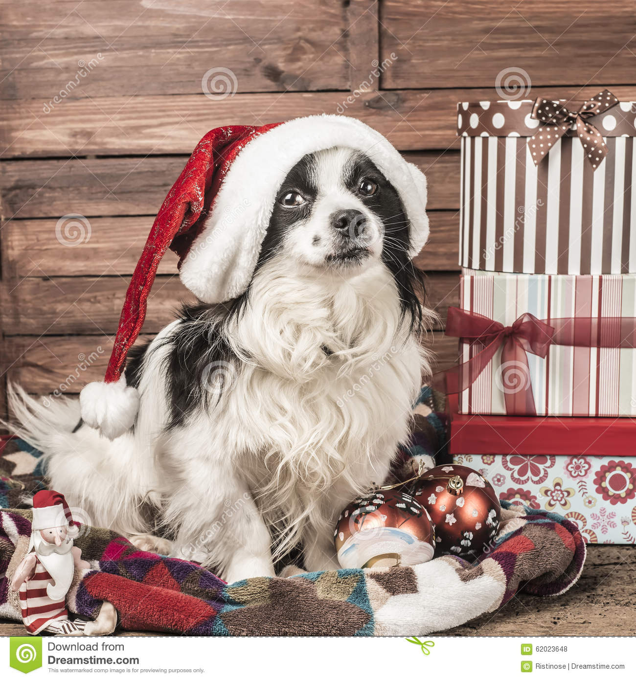 Dogs Christmas Greeting Card Stock Photo Image Of Nativity