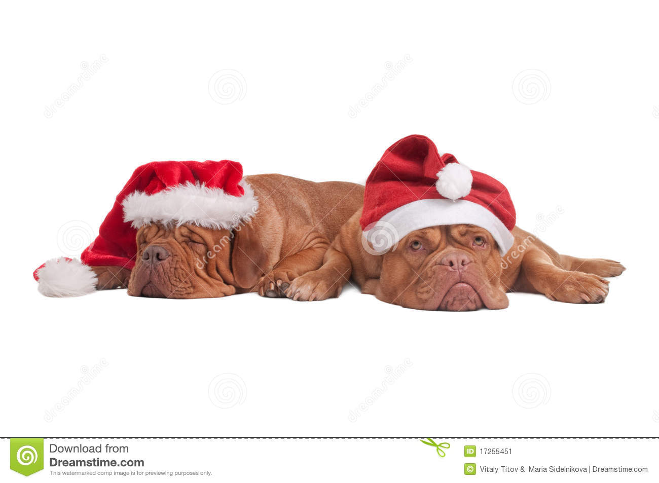 Christmas Hats For Dogs.Dogs With Christmas Hats Stock Image Image Of Christmas