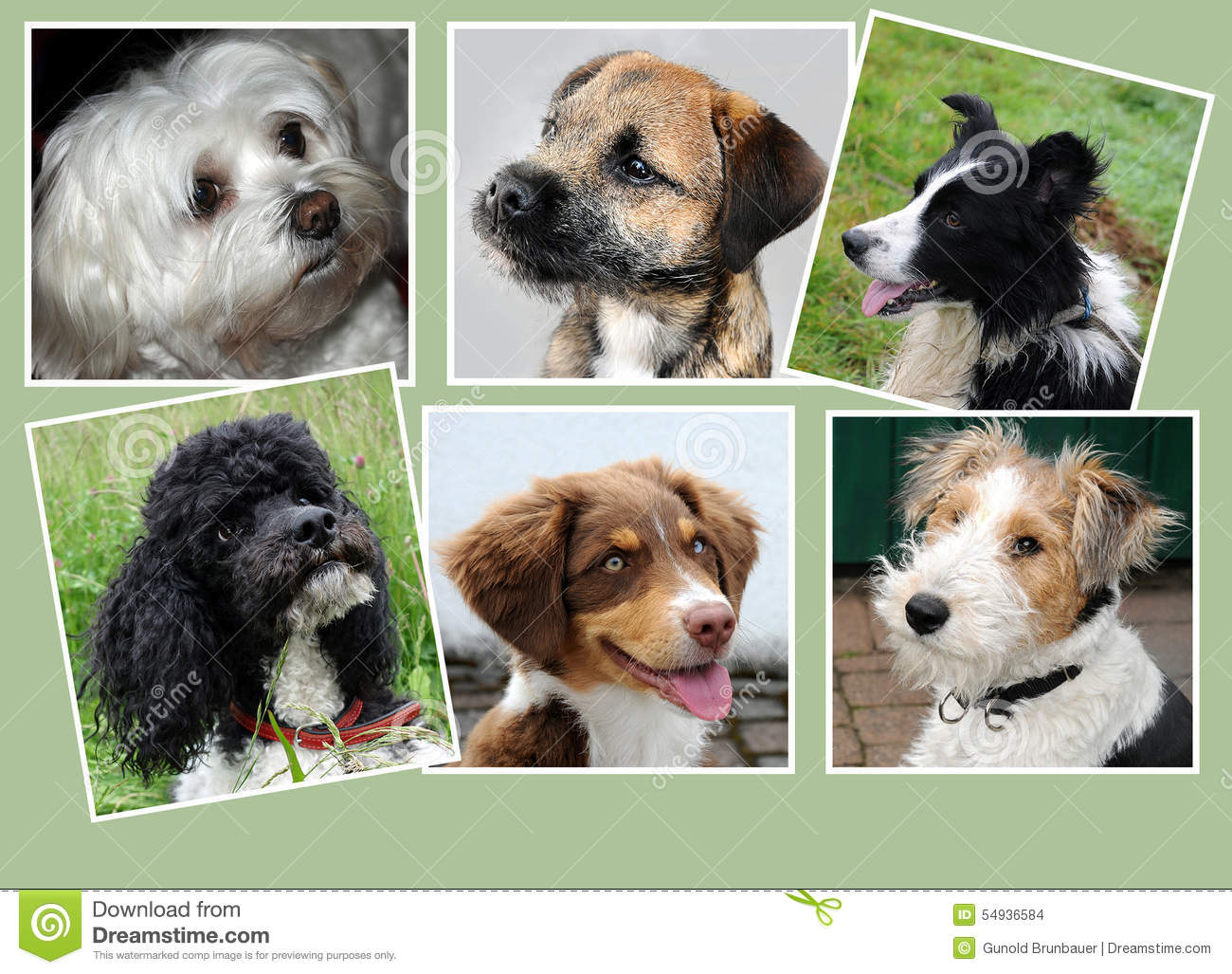 Dogs Collage Stock Photo Image 54936584