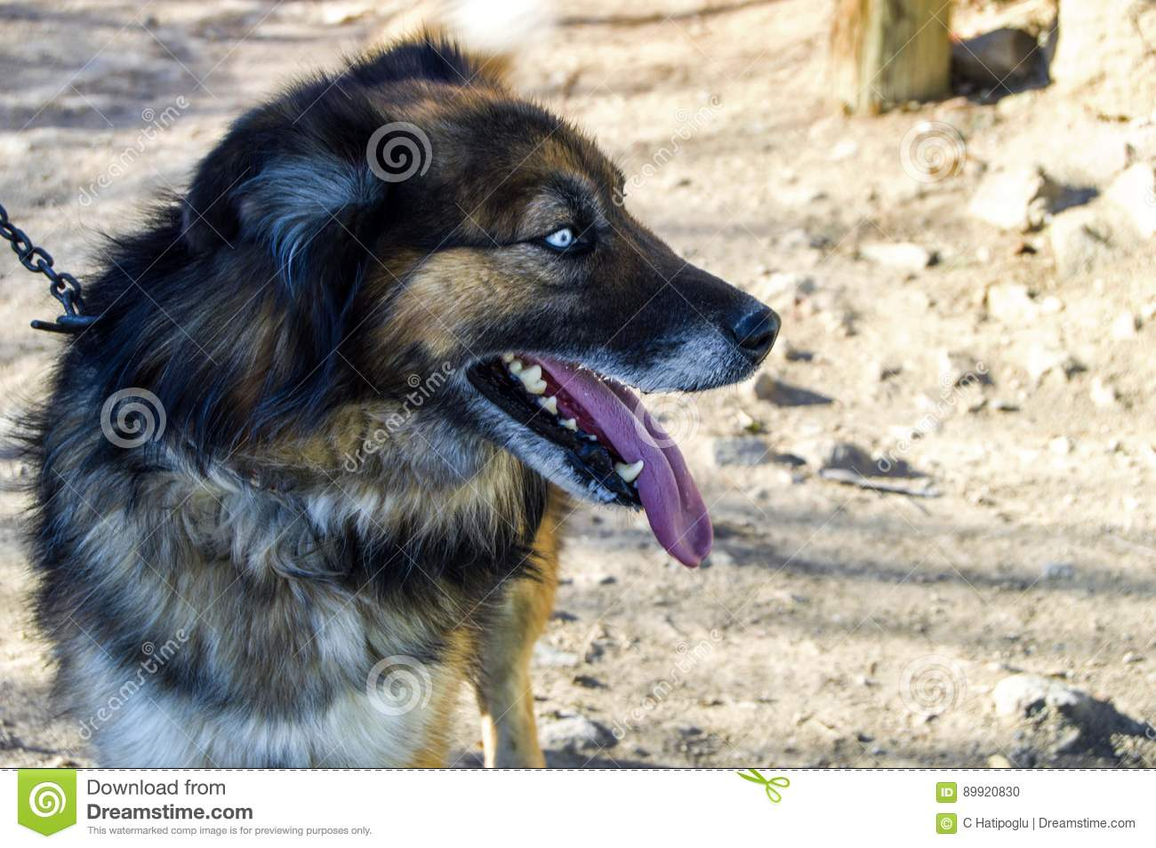 Dogs connected to the chain, pictures of the dogs being shot,