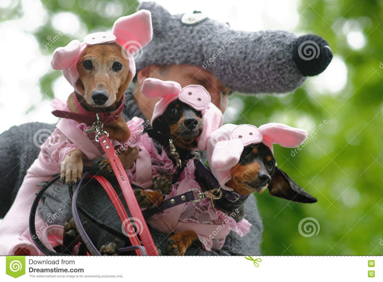 Dogs in costumes during Dachshund parade Royalty Free Stock Photos & Dogs In Costume During Dachshund Parade Editorial Photography ...
