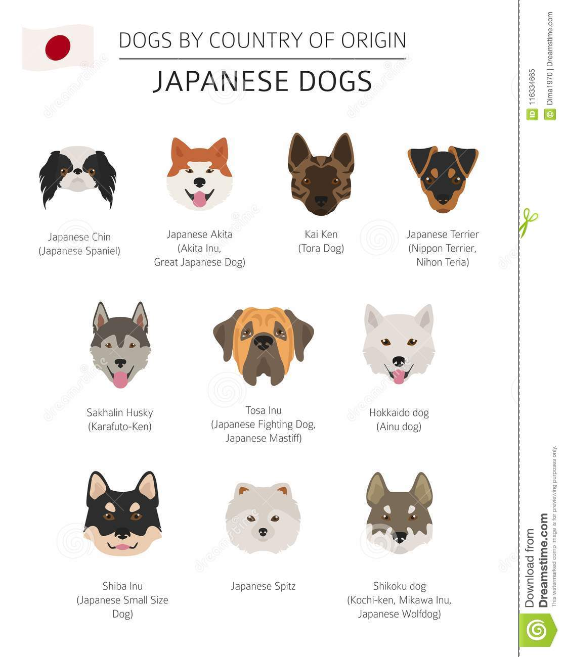 Dogs By Country Of Origin  Japanese Dog Breeds  Infographic