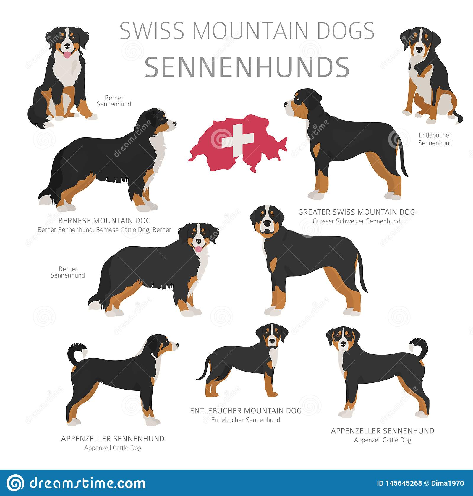 Dogs By Country Of Origin Swiss Dog Breeds Shepherds
