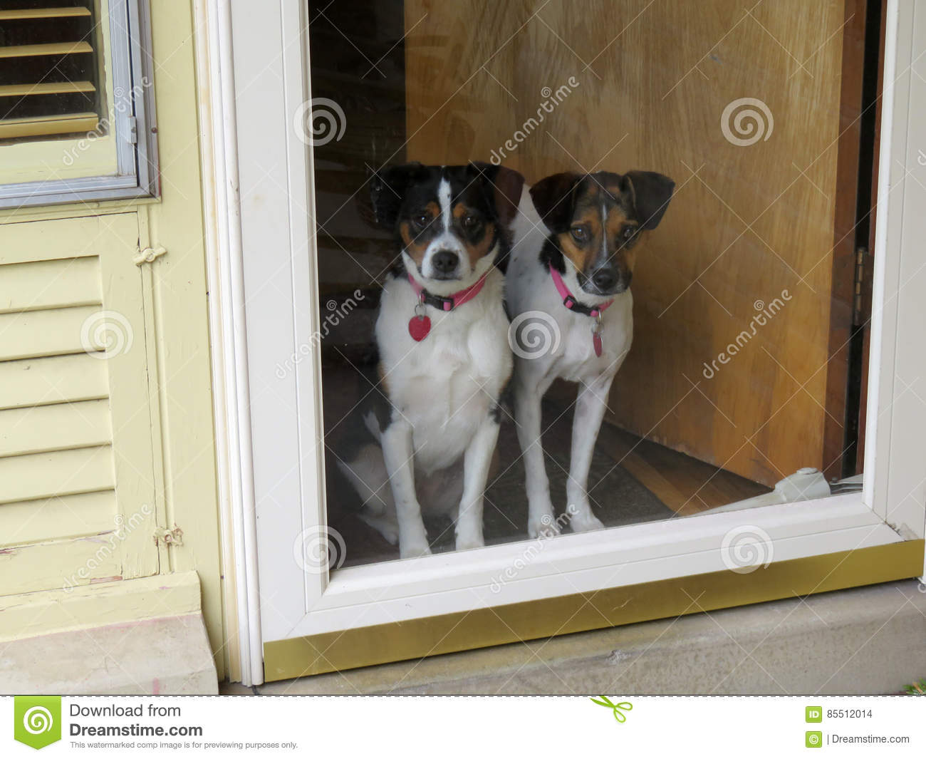Dogs at the door