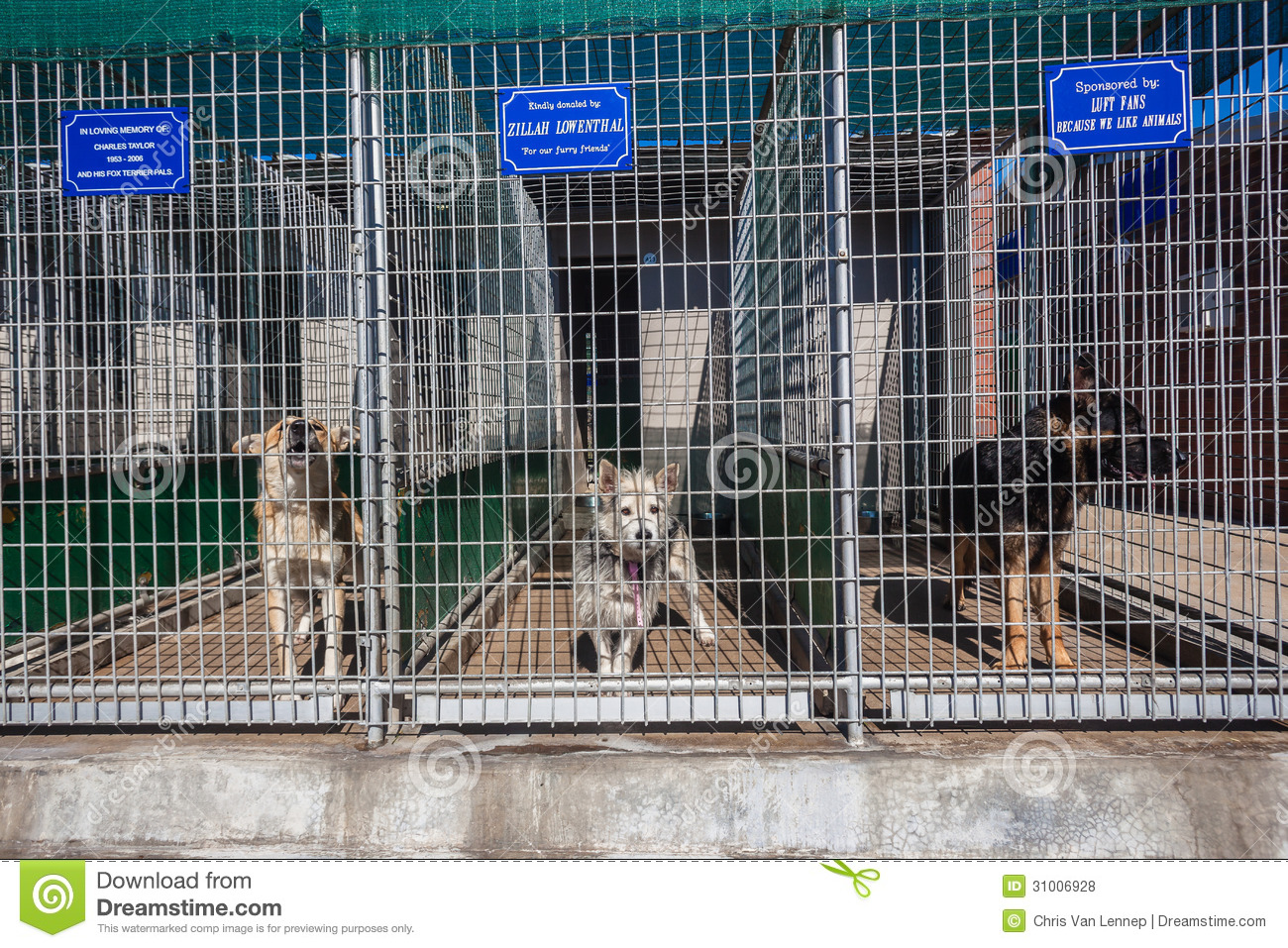 Dogs Kennel Cages Waiting Owners Editorial Stock Photo