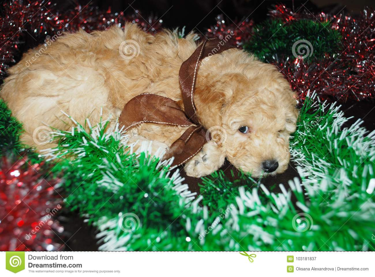 Dog , New Year stock image  Image of fatigue, adorable