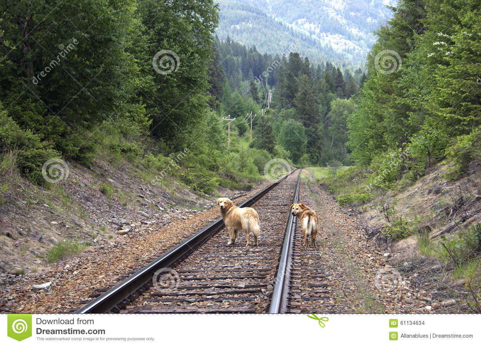 Dogs on railroad tracks stock photo. Image of walking